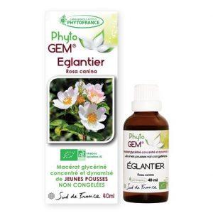 eglantier - phytogem - gemmotherapie - phytofrance