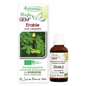 erable - phytogem - gemmotherapie - phytofrance