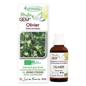 olivier - phytogem - gemmotherapie - phytofrance