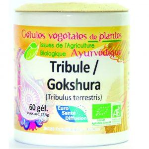 Gokshura - gelules de plantes ayurvediques - euro santé diffusion